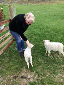 Pet lambs at a farm we stayed in - aaahhh!